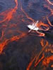 Gulf Oil Spill 'Could Go Years' If Not Dealt With